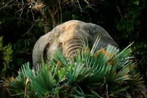treeelephant