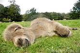 sleepdonkey